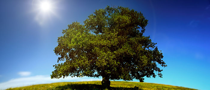 tree-w-sun-on-left.Large700x300