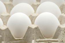 Eggs.carton