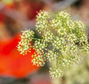 Pollen, eczema trigger